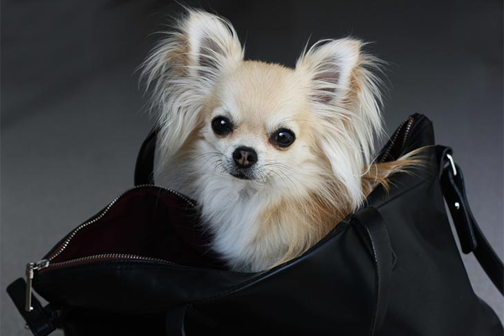 How to Choose the Best Dog Carriers for Your Pet 1