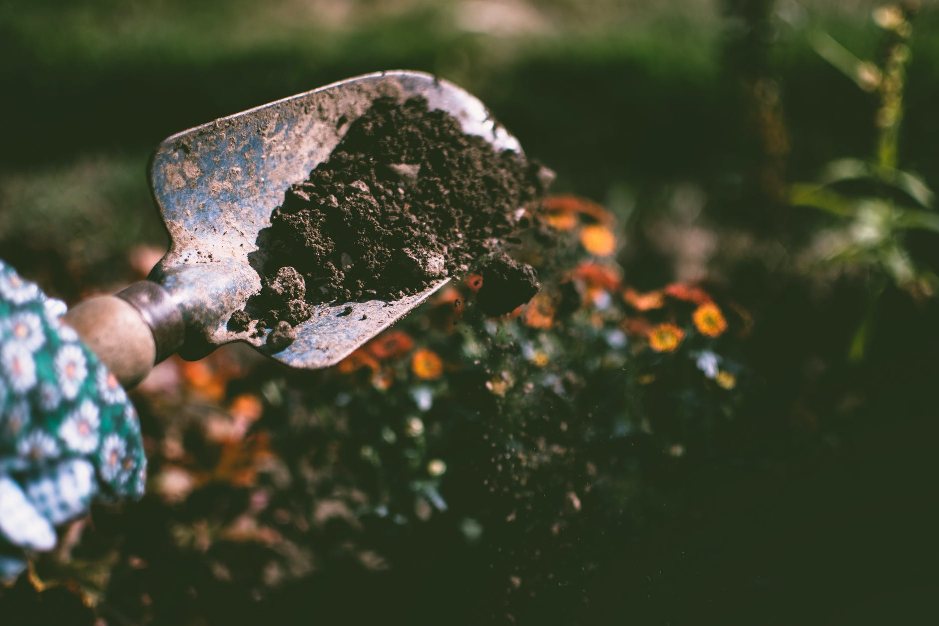 Importance of Soil for Your New Garden Foundation