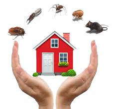 HOW TO KEEP BUGS AWAY WITH PEST CONTROL 1