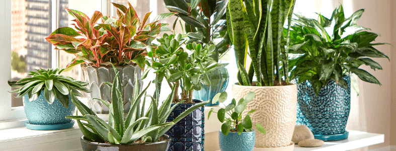 Know Why Artificial Plants Are A Great Gift Option