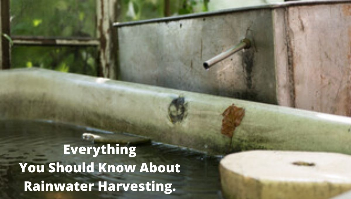 Rainwater Harvesting - Collect & Store The Cleanest Rain Water From Your Roof!
